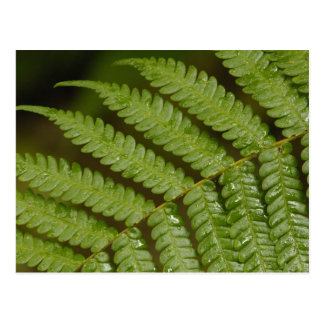 A fern detail, from Mindo Cloud Forest, Postcard