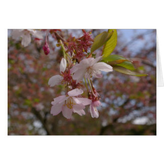 A Few Cherry Blossoms Stationery Note Card