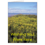 A Field Of Butter And Eggs Greeting Card