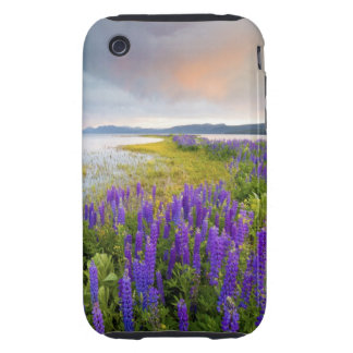 A field of Lupine wildflowers on the North Shore iPhone 3 Tough Case