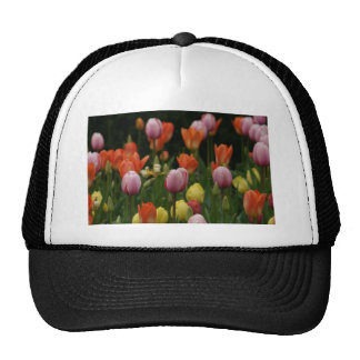 A field of peonies, cyclamens and tulips flowers hats