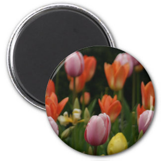 A field of peonies, cyclamens and tulips flowers magnet
