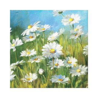 A Field of White Daisies Canvas Print