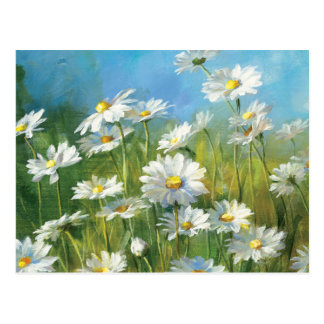 A Field of White Daisies Post Cards