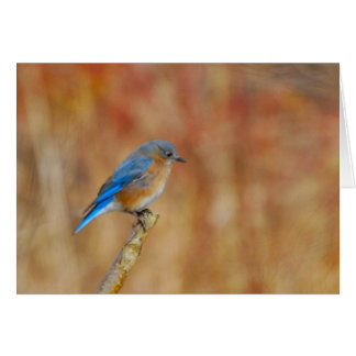 A Fine Fall Afternoon (blank) Stationery Note Card