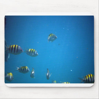 A Fishy Mouse Pad