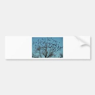 a Flock of birds Bumper Stickers