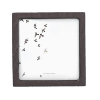 A flock of birds is flying at the sky jewelry box