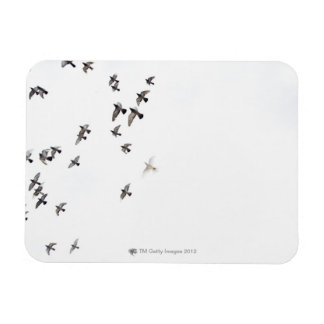 A flock of birds is flying at the sky magnet