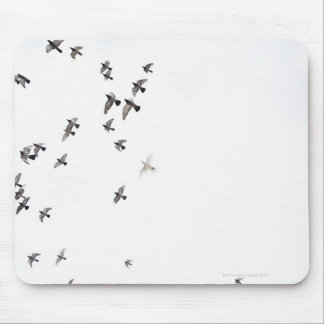 A flock of birds is flying at the sky mouse pad