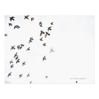 A flock of birds is flying at the sky postcard