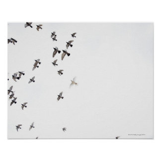 A flock of birds is flying at the sky poster