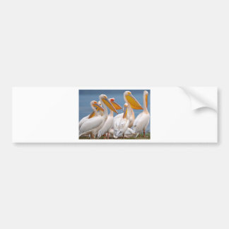 A Flock Of Pelicans Bumper Sticker
