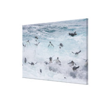 A flock of Rockhopper penguins launch out of the Canvas Print