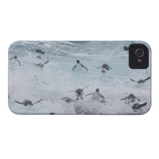A flock of Rockhopper penguins launch out of the iPhone 4 Cover