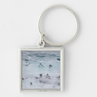 A flock of Rockhopper penguins launch out of the Keychain