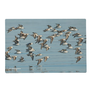 A Flock of Sanderlings Takes Flight Placemat