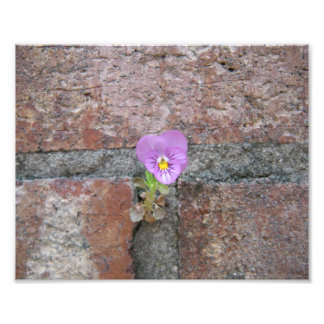 A Flower from Concrete Photo Print