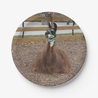 A Fluffy Brown Llama laying down in zoo pen Paper Plate