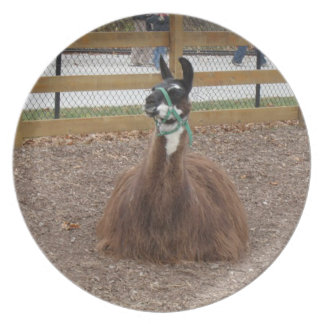 A Fluffy Brown Llama laying down in zoo pen Plate