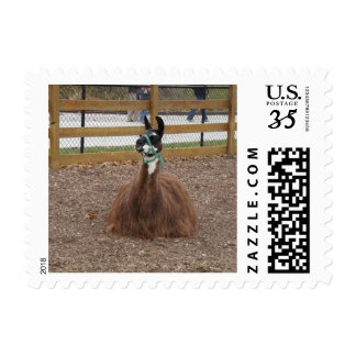 A Fluffy Brown Llama laying down in zoo pen Postage Stamp