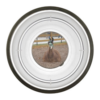 A Fluffy Brown Llama laying down in zoo pen Pet Bowl