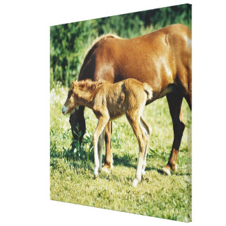 A foal and a horse in a pasture gallery wrap canvas
