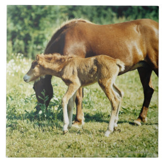A foal and a horse in a pasture. ceramic tile