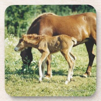 A foal and a horse in a pasture. drink coasters