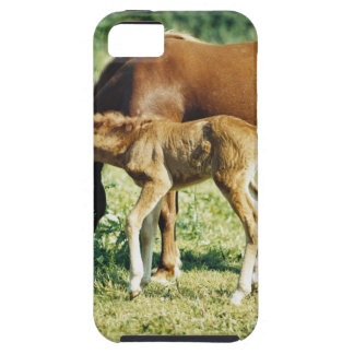 A foal and a horse in a pasture. iPhone 5 cover