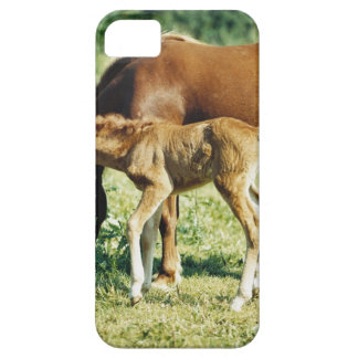 A foal and a horse in a pasture. iPhone SE/5/5s case