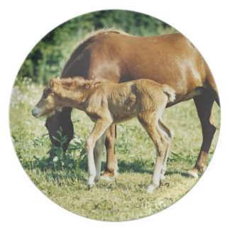 A foal and a horse in a pasture. plate