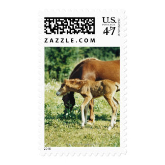A foal and a horse in a pasture. postage