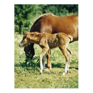 A foal and a horse in a pasture. postcard