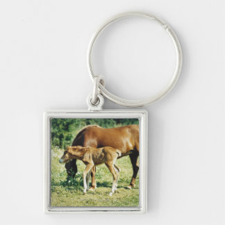 A foal and a horse in a pasture. Silver-Colored square keychain