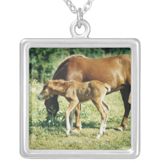 A foal and a horse in a pasture. silver plated necklace