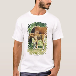 A foal and a horse in a pasture. T-Shirt