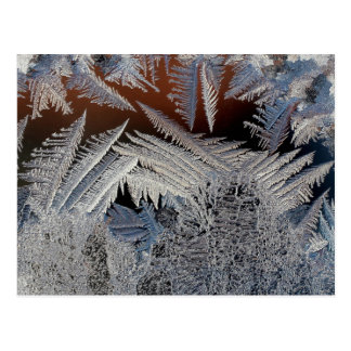 A forest of ice crystals postcard