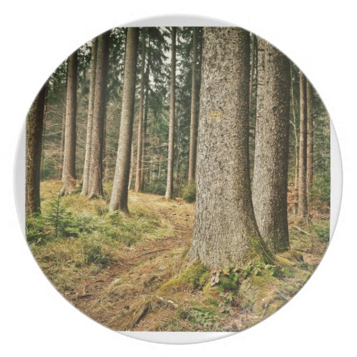 A Forest Plate