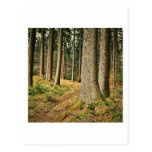 A Forest Post Cards