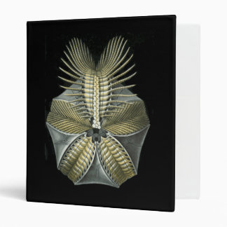 A Fossil Sea Urchin Binder