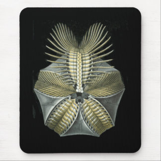 A Fossil Sea Urchin Mouse Pad