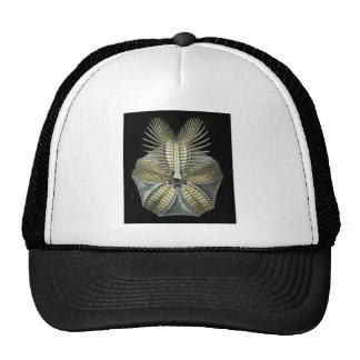 A Fossil Sea Urchin Trucker Hat