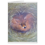 A Fox in the field Greeting Card