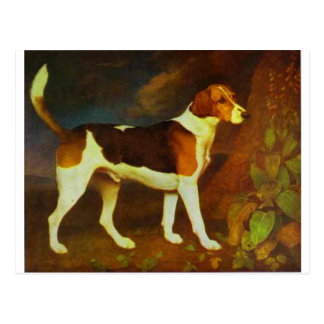 A Foxhound, Ringwod by George Stubbs Postcard