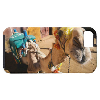 A friendly camel awaits its next rider, Cairo, iPhone SE/5/5s Case