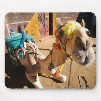 A friendly camel awaits its next rider, Cairo, Mouse Pad
