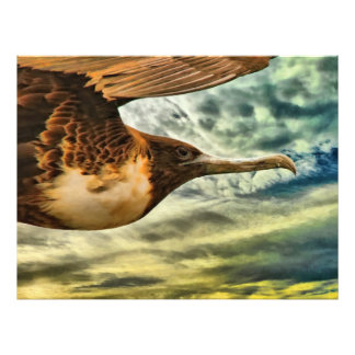 A frigatebird close up photo print