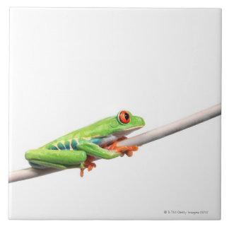 A frog hanging on ceramic tiles