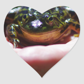 A frog in the hand heart sticker
